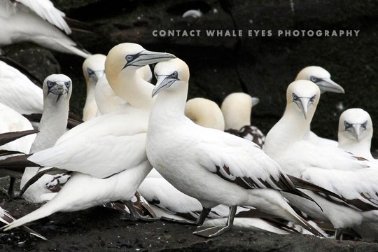 Contact Whale Eyes Photography